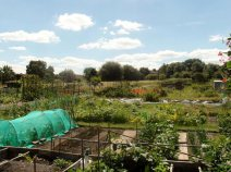 Turpington-Allotments-(2)